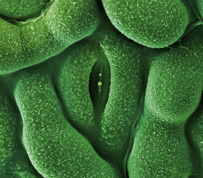 Welcome to the STOMATA project